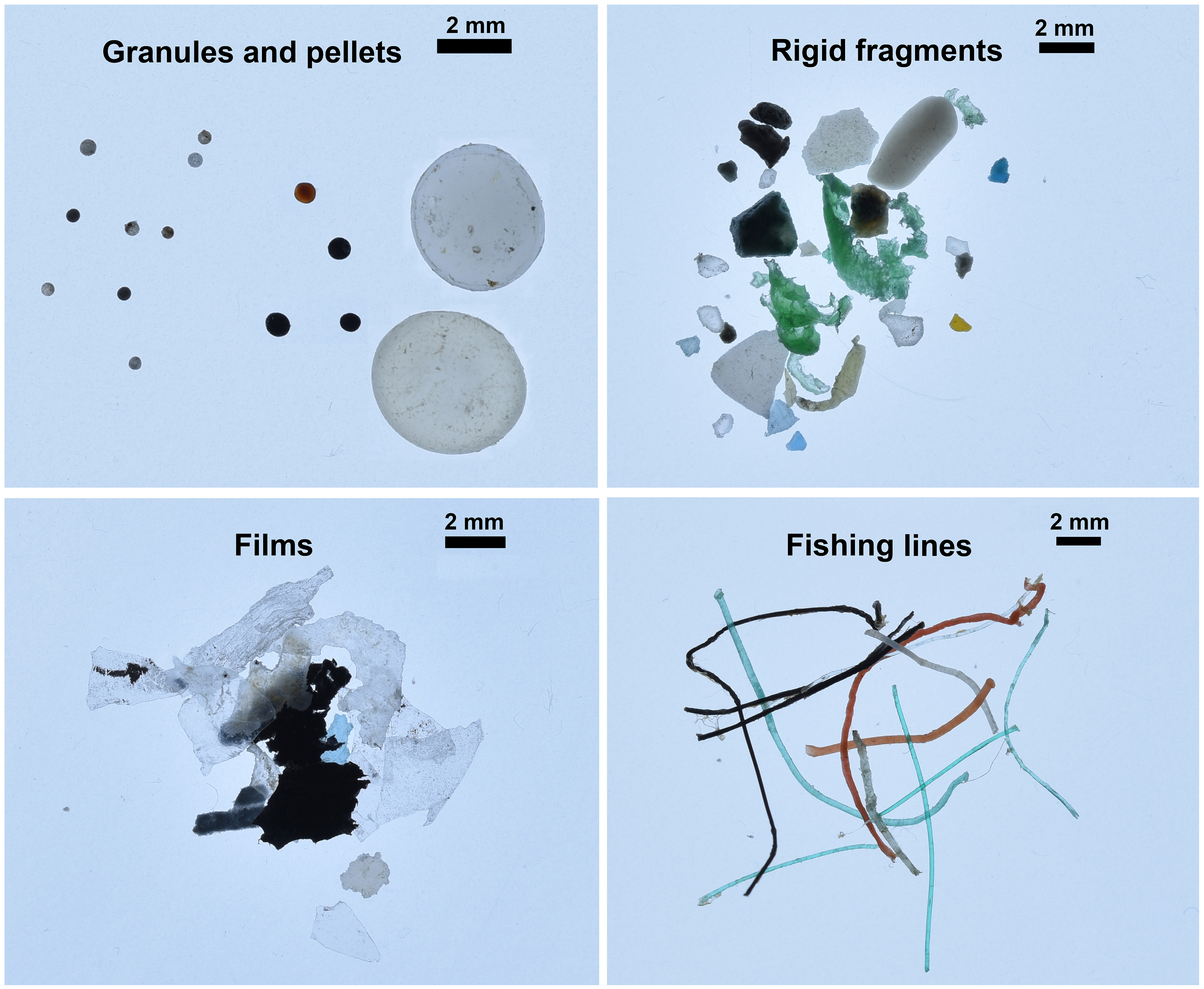 Microplastics found in the Arctic Ocean, divided into four different categories. Photos by Andres Cozar