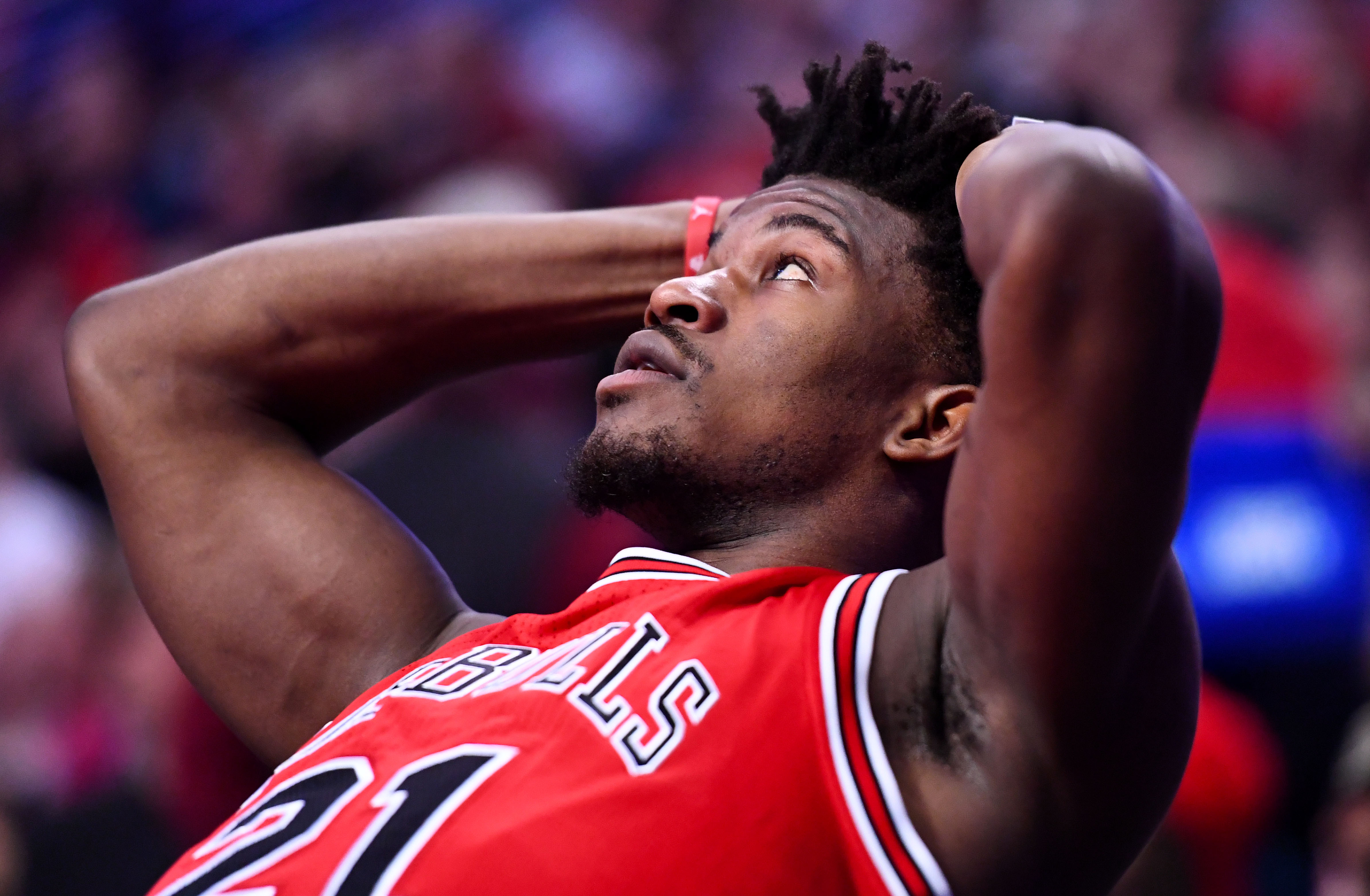 The Chicago Bulls Are ...